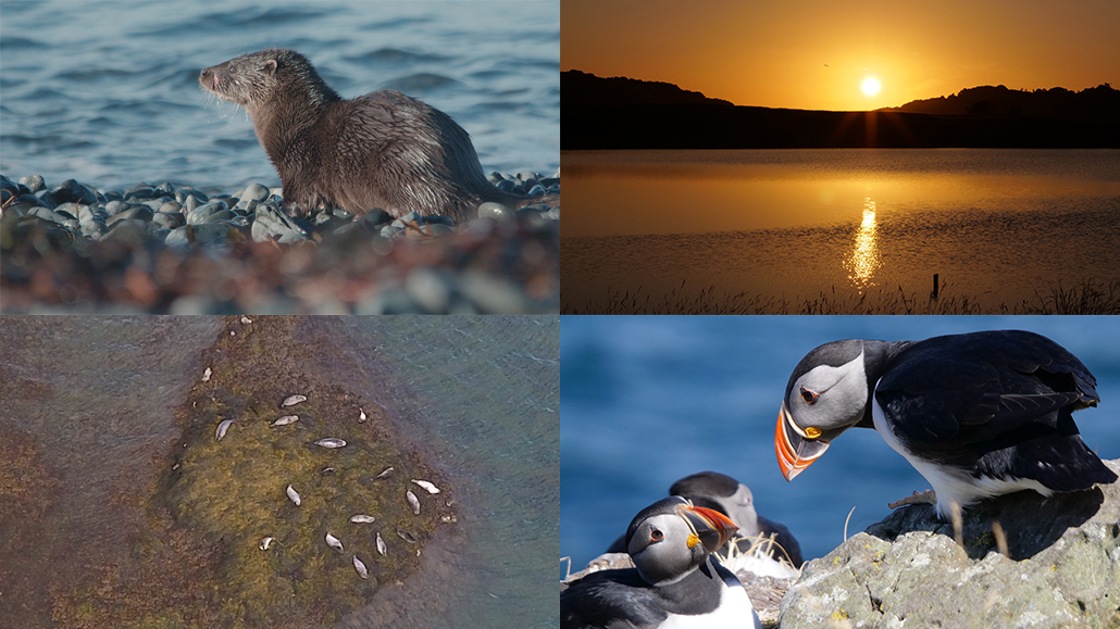 wildlife filmmaking course on Mull