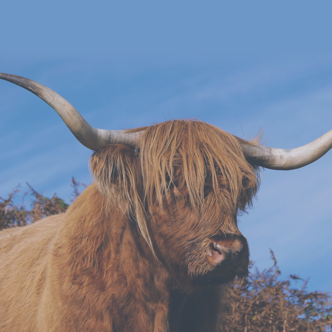 What to see on Mull