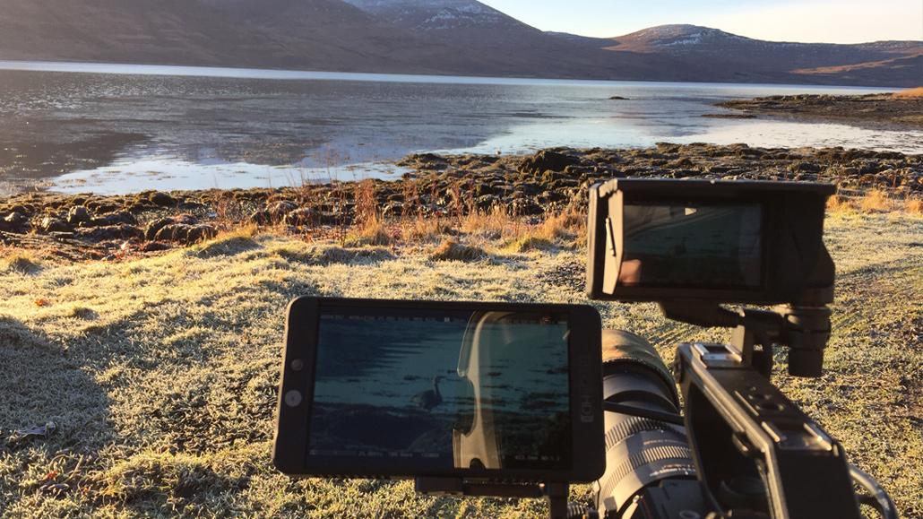 wildlife filmmaking Mull